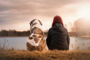 犬を飼う前にわかっておくべきこと【まとめ】