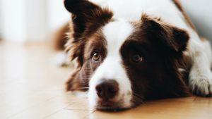 犬の嘔吐【原因まとめ】と【対応策】