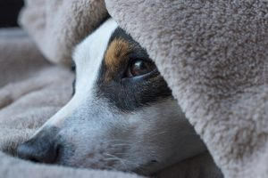 犬の下痢【原因まとめ】と【対策】